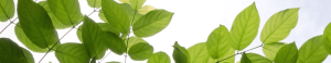 cropped-leaves-banner-1.png